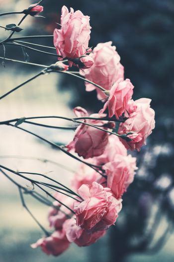 """〝ピンク系の優しい感じ""""、〝母の日だからカーネーションを入れて欲しい""""など、ざっくりでもイメージを伝えましょう。イメージがない場合は、どんなプレゼント(母の日、誕生日、入学祝など)なのかを伝えるのも◎"""