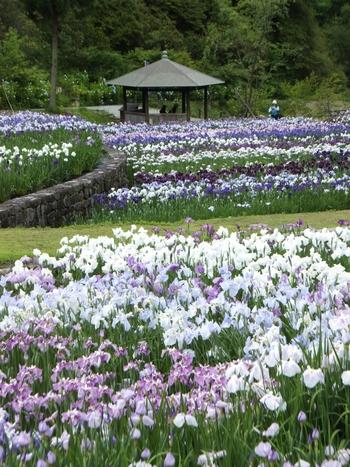 美しい池泉回遊式庭園がある播州山崎花菖蒲園は、1200品種もの花々が植えられている庭園で、1979年に開園されました。