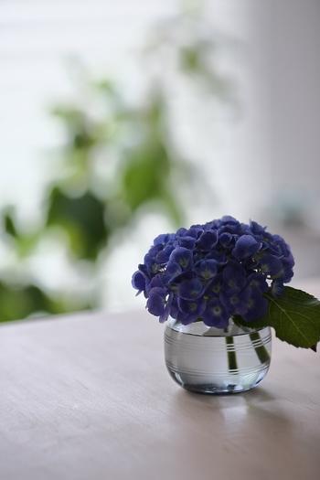 お花をしっくりくる花瓶に生けてあげたら、毎日、しっかりお手入れしてあげましょう。きれいな状態をすこしでも長くキープして、最後の一輪になるまでじっくりと楽しみましょう。