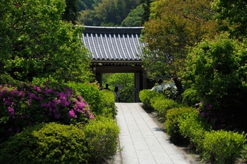 こちらは境内から山門を見たところです。ツツジの咲く季節にも訪れたい、緑豊かなお寺です。