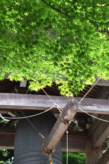 新緑の季節には、ゆっくりとお参りができる鎌倉の神社仏閣へ足を伸ばしてみてはいかがでしょうか。風と水の音を聴きながら、静かな心で自然と寄り添ってみると、いつもとはすこし違った自分に出会うことができそうです。