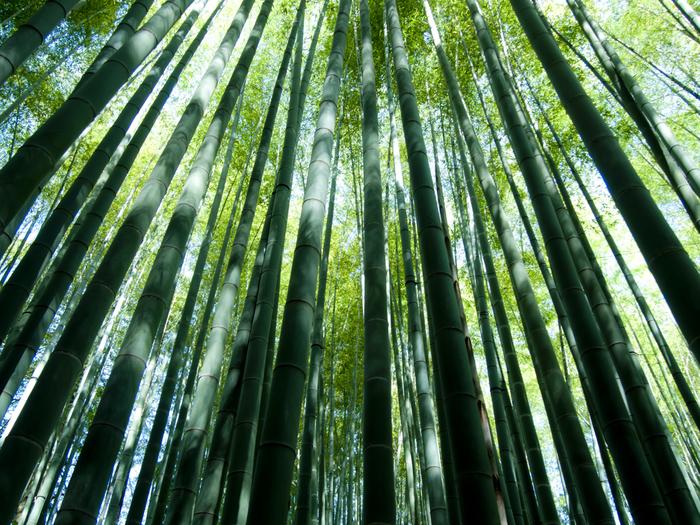 桜の季節が過ぎ去り混雑もひと段落した鎌倉の、新緑が美しい神社仏閣を訪れてみませんか?清々しい空気と優しい緑の輝きが、慌ただしい日常から心を切り離し、静かな時間を与えてくれます。神社仏閣とあわせて、お抹茶などがいただける、境内にある茶房もいくつかご紹介します。