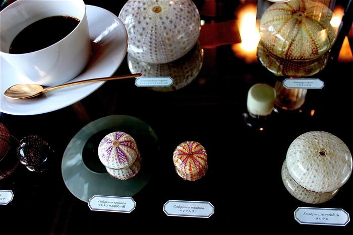博物館の展示用ショーケ―スの様なテーブルは、覗き込むと色々な標本が。色とりどりで美しいのはウニなんです! 見たことのない標本に会話もはずみそう。