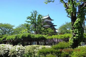 高島城はソメイヨシノなど、桜の名所として有名です。ですが、見ごろを迎えた後でも、ご安心を。5月中旬には藤の花を楽しめますよ。お城と花のコラボレーションを楽しんでくださいね。