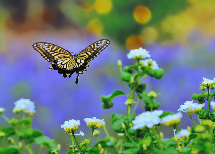 わたしたちの人生は、過去と現在、未来でかたち作られています。どんな「今」もすぐに過去のものになってしまいます。今、わたしたちが置かれている状況を客観的に見ることはとても難しいことですよね。人は誰でも、苦しいことには気づきやすいのに、幸せであることには気づきにくいものなんですよ。