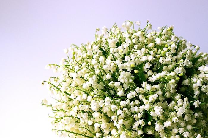 すずらんの花言葉にはたくさんの意味があるといわれています。中でも、ポピュラーな花言葉が「再び幸せが訪れる」や「無意識の美しさ」「ピュア・純粋」などが挙げられます。フランス語の花言葉は少し意味が違うものもあり、「ずっと前からあなたのことが好きでした」や「仲直りしましょう」などの意味もあるようです。