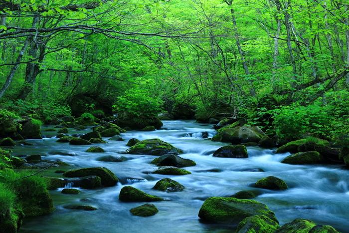青森県十和田市にある「奥入瀬渓流(おいらせけいりゅう)」。約300種類もの苔が生息しています。その下流で3つの川が合流する地点「三乱(さみだれ)の流れ」は豊かな水量ながら、おだやかな流れと飛び石の苔が美しいビューポイント。5月中旬頃には、ムラサキヤシオツツジと一緒にこの景色を楽しめます。
