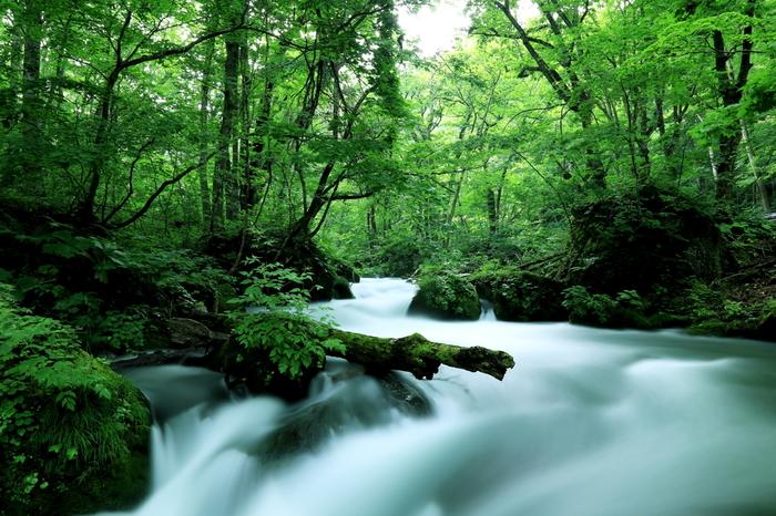 奥入瀬渓流では、苔だけでなく、様々な自然の表情を楽しむことができます。奥入瀬渓流で最も流れが激しい「阿修羅の流れ」。白いしぶきと緑のコントラストが美しく「奥入瀬渓流」を代表する景勝地として有名です。