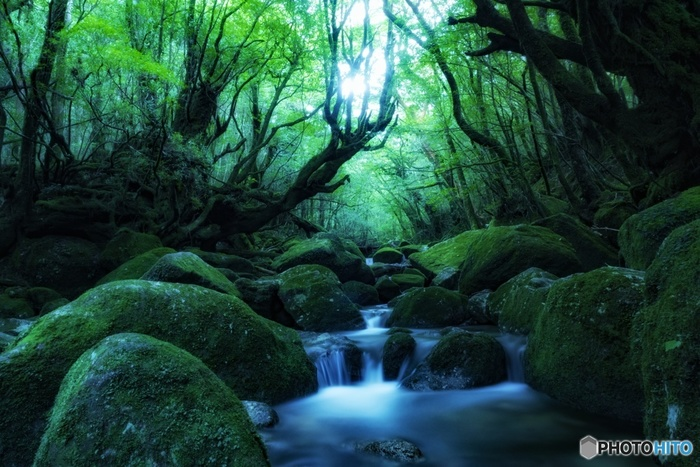 屋久島北部を流れる宮之浦川支流白谷川の渓谷、「白谷雲水峡(しらたにうんすいきょう)」。屋久島の中でも特に雨量が多い場所に位置します。