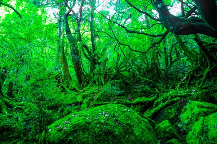 澄んだ水が流れる渓流、照葉樹と常緑樹が混生した緑の苔むす自然林…。幻想的な世界が広がります。