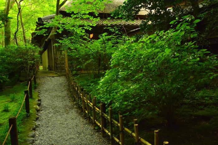 京都市右京区にある、竹林と楓に囲まれた草庵「祇王寺(ぎおうじ)」。「平家物語」にも登場する尼寺です。