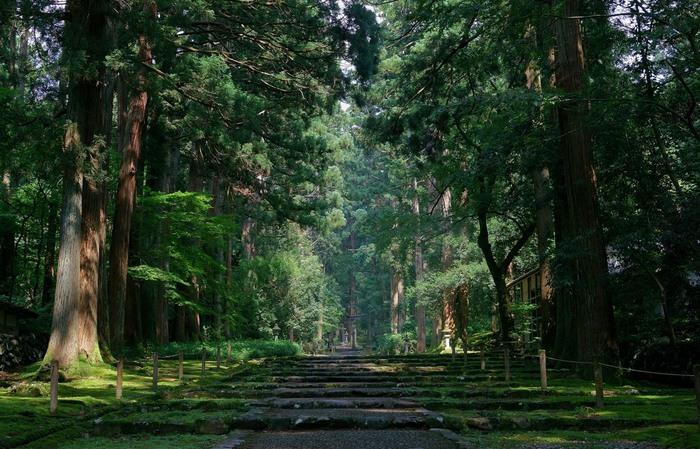 福井県勝山市の白山国立公園内に位置する「平泉寺白山神社(へいせんじはくさんじんじゃ)」。悠久の歴史を感じる、杉やブナなどに沿って続く参道「菩提林石畳参道」は、「日本の道百選」に選ばれています。