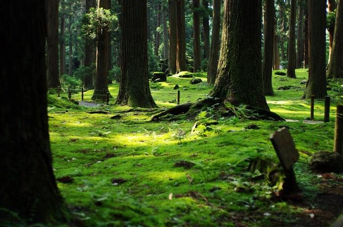 通称「苔寺」とも呼ばれる平泉寺白山神社。まるで緑のじゅうたんが敷き詰められているようです。