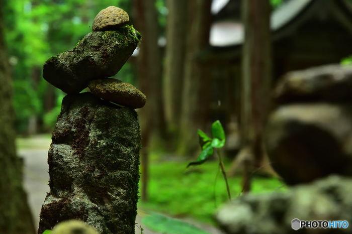 苔むした積み石も。しんと静まり返った境内をゆっくり散策したくなりますね。