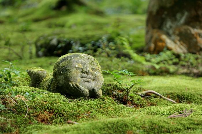 森林や渓流、神社など様々なところに広がる何種類もの苔。一言に「苔の絨毯」と言っても、その中には何種類もの苔が生息しています。知れば知るほど奥深い苔の世界。しっとりと佇むきれいな苔のある景色を楽しんでみませんか。
