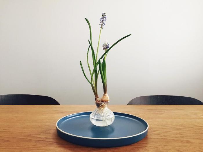 お部屋にお花がある暮らし。切り花ほど水の交換も多くなく、そして成長を見届けられることが醍醐味の水耕栽培。土で手を汚すこともなく簡単に始められるので初心者さんもまずは初めてみませんか?