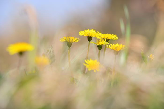 意外に簡単!自宅でできる草木染めで自然の色使いを楽しもう♪