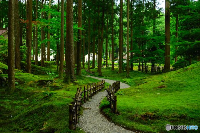 石川県小松市にある、国内有数の苔の名所「苔の里」。日本ばかりでなく、海外からも高い評価を得ている苔の名所です。