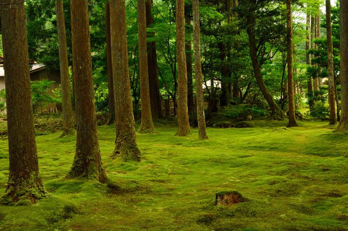 銘木「日用杉」をはじめ、古民家や小川、田園などの美しい里山景観は「全国農村景観百選」に選ばれているほど。