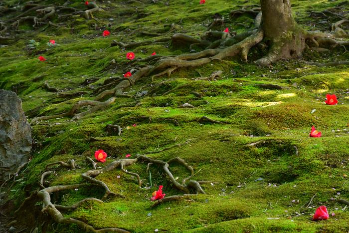 季節ごとに、苔の上に広がる違う物語を感じられそう。