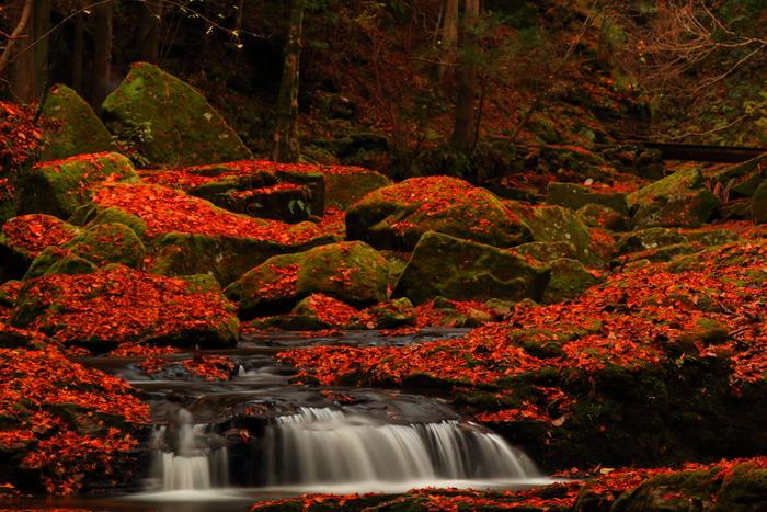 紅葉の名所としても知られているので、滝や苔の上に紅葉が散った後の風景を楽しみに訪れるのもおすすめです。
