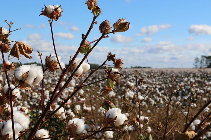 肌への優しさを考えるなら、綿素材またはシルク素材の下着を選びましょう。綿の中でもオーガニックコットンなら、さらに刺激が少なくなりますよ。