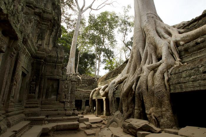 タ・プロームは、大自然の脅威を体感できるようにするため、最低限の修復しかされておりません。この遺跡はガジュマルの樹の根で覆われており、遺跡が巨木に飲み込まれつつあるかのような印象を受けます。