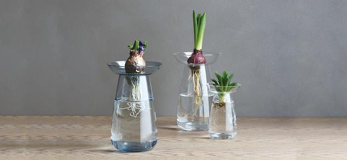 とくに球根は植え付け時期がくるまでの間、しっかりと根を伸ばしておきたいもの。受け皿の上に置けば球根は水に触れないため、ダメージを受ける心配がありません。アボガドの種や多肉植物にも◎