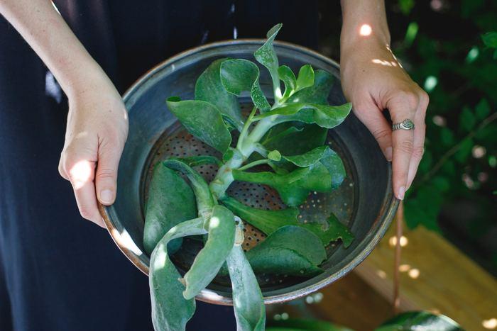 寄せ植えの鉢は、浅すぎず深すぎず、土がたっぷり入るものが扱いやすいでしょう。高さが10~15cm程度のものを目安にしてみてくださいね。慣れてきたら、リース型のバスケットや、デコラティブな脚付きのものなど、置く場所の雰囲気に合うすてきな鉢を探してみて。