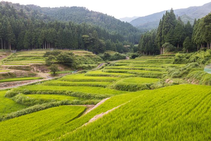 山を切り開き、用水路を通して造り上げられた棚田は、昔の人々による知恵と苦労の結晶です。棚田と里山が魅せる素晴らしい景色を眺めていると、この美しい風景を次世代に残したいという思いが募ってくることでしょう。