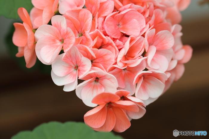 マリーゴールドの花言葉は「友情」、ゼラニウムは「真の友情」、アイビーは「友情・誠実・信頼」など。大切なお友達へのお花のメッセージを贈るのもいいですね。ただし、マリーゴールドはネガティブな意味もあるそうですから、カードを添えるといいとか。