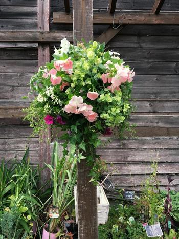 色や形の異なるみずみずしいグリーンをギュギュっと集めた、清涼感あふれる寄せ植えです。淡い色のビンカ(ニチニチソウ)をバランスよく配置し、ふんわりとナチュラルなかわいさをプラス。花の種類が少なくなる夏場には、こんなグリーンをメインとした寄せ植えを楽しむのもおすすめです。