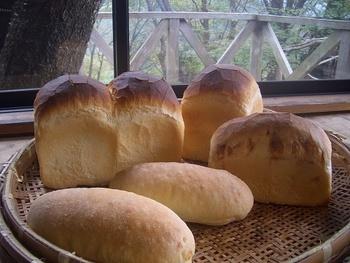 日本を代表する観光地「伊豆半島」。海や山の自然豊かな場所で、おいしいお料理や温泉が楽しめます。これから暖かくなるとビーチリゾートに訪れる方も多いですよね。そんな伊豆半島は、実は知る人ぞ知るパン屋の激戦区なんです。  石窯で焼き上げたパンや、天然酵母のパンなど素材にこだわったお店のほか、豊かな自然を感じられるイートインスペースのあるお店など個性あふれるパン屋さんがたくさん。  おいしいパン屋さんを探しに伊豆半島をめぐってみませんか?