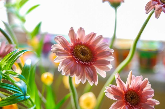 職場では、転職などで新しい門出を迎える先輩や同僚も多いはず。そんな方へのお花は、希望や前進を表すガーベラや、「門出」が花言葉のスイートピーなどがおすすめです。