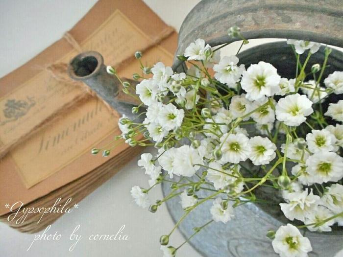 花束によく使われるかすみ草も「湯揚げ」が適しています。湯揚げの際、お花に熱い湯気が直接あたらないよう新聞紙などで包んでから行うと、お花をきれいに保つことができますよ。
