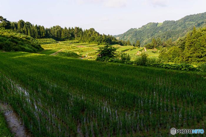 新潟県十日町市にある狐塚の棚田は、約19ヘクタールの敷地に84枚の水田が敷かれています。棚田の宝庫でもある十日町市においても、日本の棚田百選に選ばれているのは、ここ狐塚の棚田のみとなります。