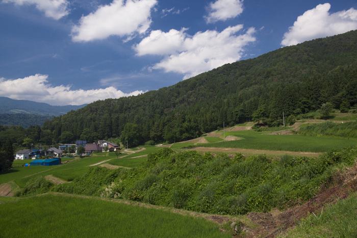 福島新田の棚田は、約10ヘクタールの敷地面積で、棚田としての規模は大きい方ではありません。しかし、周囲の美しい里山風景と150枚に及ぶ水田が見事に調和した風景の美しさは傑出しています。