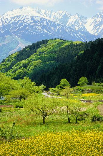 頭語の後に続くのが時候の挨拶です。これはその季節の変化や状況に触れる内容になります。例えば5月は「新緑の候」や「風が薫るさわやかな季節になりました」などになり、6月は雨と梅雨入り、紫陽花などそのシーズンを象徴する内容を書くようにします。