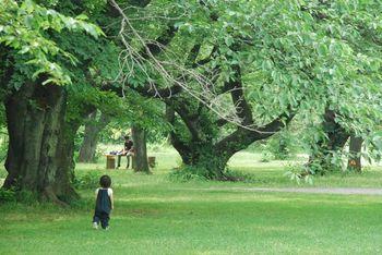 新緑の『ソメイヨシノ林』。