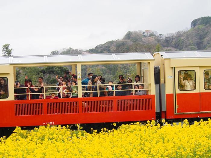 窓ガラスが無い車両は、開放感抜群!小湊鉄道の豊かな自然を満喫できますよ♪