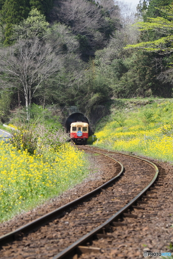 日常を離れて、自然の中でリフレッシュしに、小湊鉄道に出掛けてみませんか?