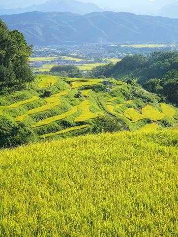 長野県上田市にある稲倉棚田では、大小合わせて700枚を超える水田が敷かれています。稲倉川両岸に棚田が広がる独特の景観から、稲倉棚田は、絶景スポットとしても人気があります。