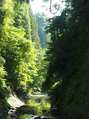「弘文洞跡」は、森の中にある奥深い切り通しのようです。