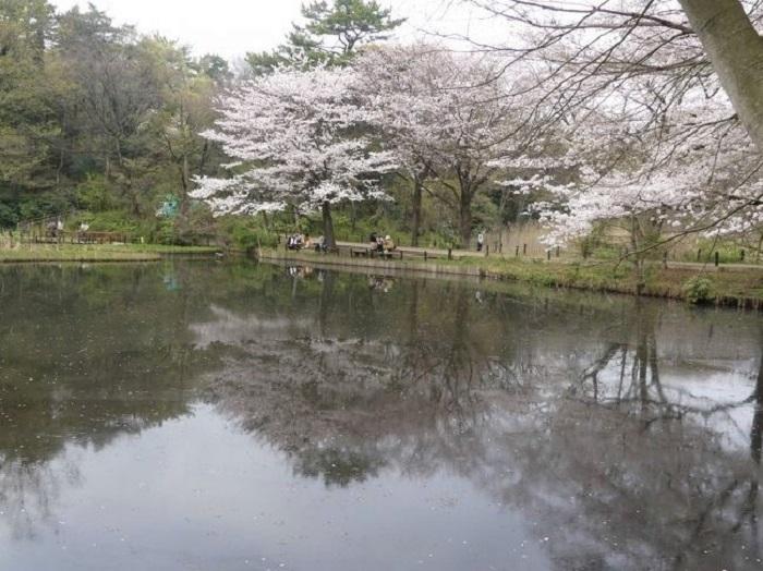 『水生植物園』。こちらもアルコールの持ち込みは禁止。桜の季節も、平日なら静かにお花見できます。