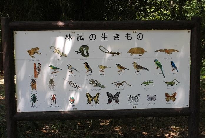 野鳥では、都区内では非常に珍しいオオルリやキビタキ、カワセミ、サンコウチョウも確認されているとか♪