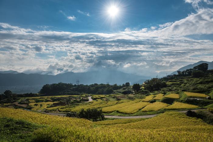 素朴で懐かしい佇まいをしている姨捨棚田は、日本の棚田百選に選定されているほか、その景観の美しさから、国の名勝、重要文化景観にも指定されています。