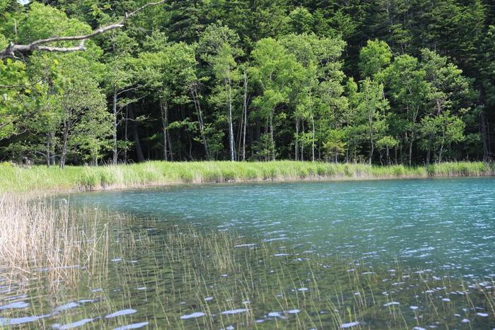 摩周湖と同じく阿寒国立公園の中にある「オンネトー」は、北海道三大秘湖のひとつに数えられる、美しい湖。湖面は季節によって色が変わるというから驚きですね。