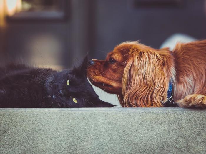 同居する他のペットがいる場合は、相性を確かめてから飼いましょう。お互いにストレスを溜め合う関係だと、誰にとっても良いことではありません。ストレスも程々に発散させてあげないと、犬だって心や体の病気にかかってしまいます。