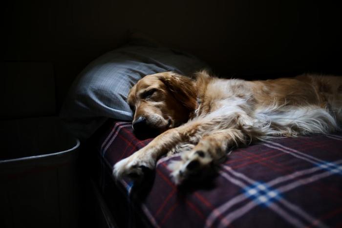 命あるもの、いつかは旅立つ日が訪れます。犬の生涯は人間よりも短く、老いるスピードは早いのです。いつか訪れる日が来ること、辛くても「今までありがとう」と感謝を伝える心構えを持っておきましょう。