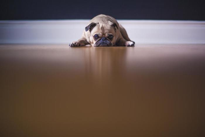 犬は群れで生活する動物です。人間のように孤独を愛したり、ひとりになって物思いに耽る趣味はありません。長時間、ひとりぼっちにはしないであげてくださいね。
